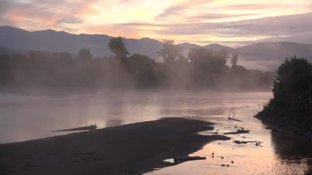 vídeos de stock e filmes b-roll de idaho geese in idaho kootenai river before sunrise - banco de areia