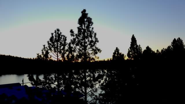 Idaho pine trees in evening