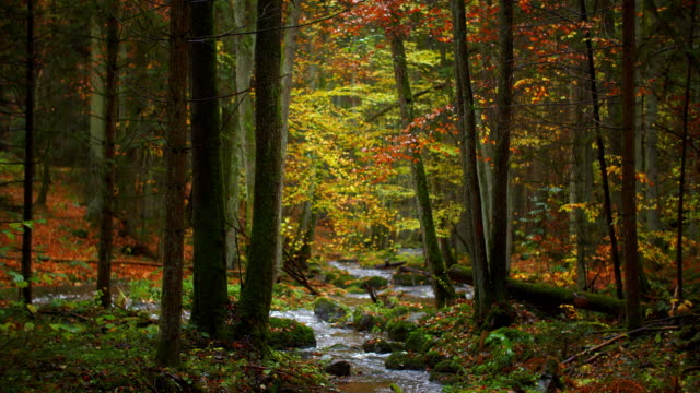 Forêt d'automne idyllique avec ruisseau