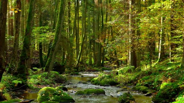 Idylliska hösten skogen med ström