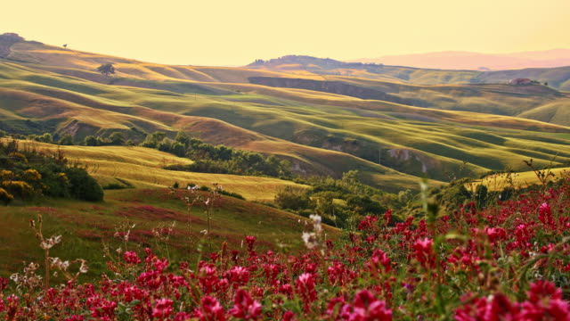 slo mo idyllic countryside in tuscany - wildflower stock videos & royalty-free footage