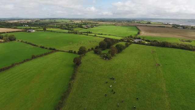 vidéos et rushes de champs idylliques du comté de wexford en irlande - bordure