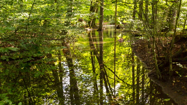 Idyllic forest reflected in pond, steady cam