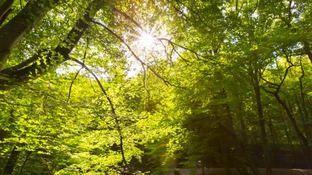Idyllic forest stream, sun shining through trees, pan up, steady cam