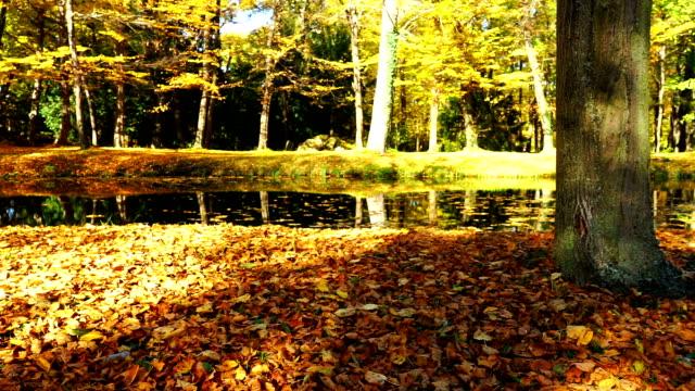 Idyllic Lake In Autumn