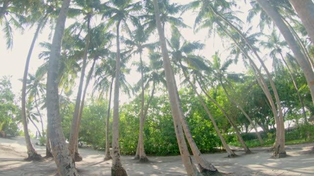 MS Idyllic Palmen auf sonnigen tropischen Strand, Malediven