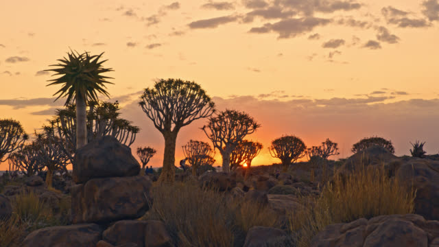 ws idyllische köcher baumwald, namibia,afrika - naturwunder stock-videos und b-roll-filmmaterial