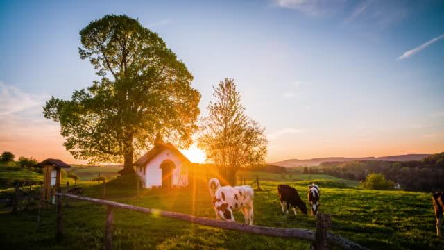 CRANE: Idyllic Rural Landscape with Cows in warm evening light - 4K Nature/Wildlife/Weather