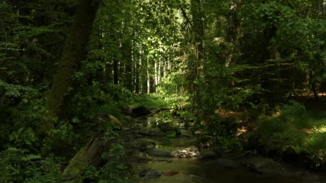 idyllischer bach fließt in sttony forest - kamerafahrt auf schienen stock-videos und b-roll-filmmaterial