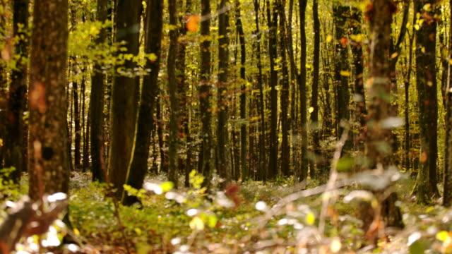 ms super slow motion idylliska, lugna skogsträd och undervegetation - höstlöv bildbanksvideor och videomaterial från bakom kulisserna