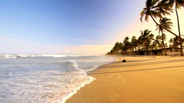 stockvideo's en b-roll-footage met idyllisch tropisch caribisch eiland strand met kokospalmen, zand en golven bij zonsondergang - zonwering