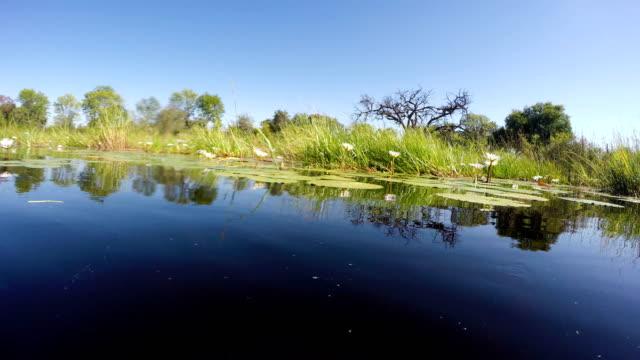 vídeos de stock, filmes e b-roll de idílica paisagem tropical. lírios de água na superfície do rio - arbusto tropical