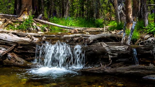 idilliaca flusso d'acqua - area selvatica video stock e b–roll