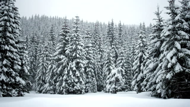 idyllic winter scene - pine tree stock videos & royalty-free footage