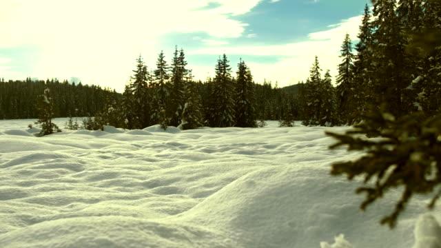 idyllic winter scene - spruce stock videos & royalty-free footage