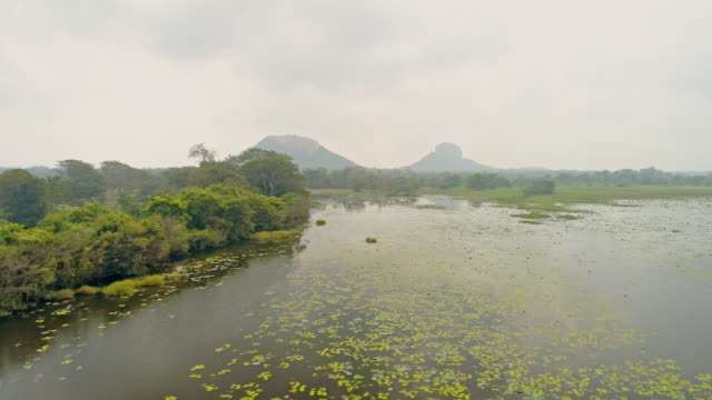 ws idyllic,placid marsh and lush landscape,sri lanka - sri lanka stock videos & royalty-free footage