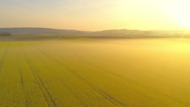 ws idyllic,vibrant yellow rapeseed oil field,slovenia - rapeseed oil stock videos and b-roll footage