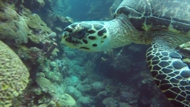 if turtles are one of your favourite animals to see in the wild this video will excite you beyond words from experiencing tiny little baby golfing... - north pacific stock videos & royalty-free footage