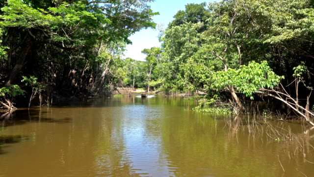 igarape - amazonas state brazil stock videos and b-roll footage