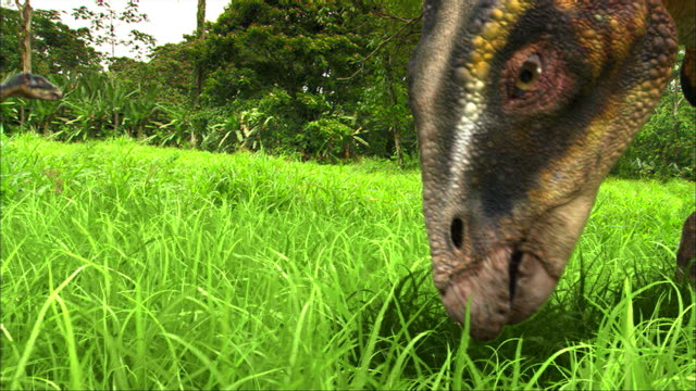 a iguanodon herd feeds on grasses and leaves. - foraging stock videos & royalty-free footage