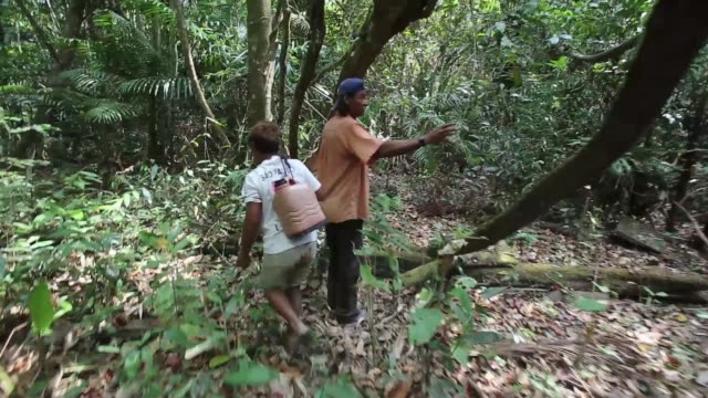 illegal logging in the province of maranhão has a massive impact on the traditional lives of the quilombo communities who had been living sustainably... - industria forestale video stock e b–roll