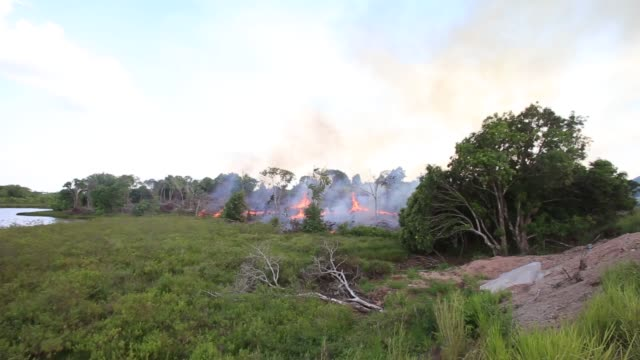 vídeos y material grabado en eventos de stock de illegal logging in the province of maranhão has a massive impact on the traditional lives of the quilombo communities who had been living sustainably... - industria forestal