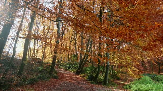 vídeos y material grabado en eventos de stock de sendero iluminado en un bosque de otoño - acera