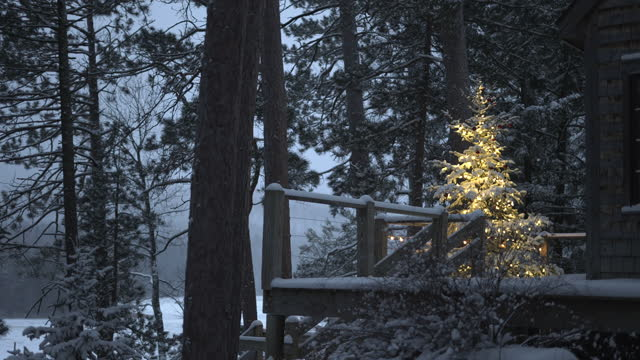 illuminated outdoor christmas tree, on snowy evening. - solstice stock videos & royalty-free footage
