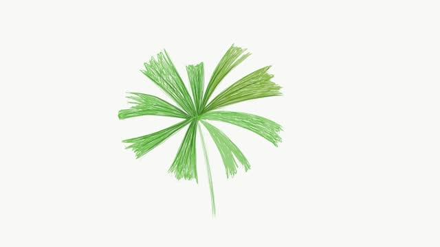 vidéos et rushes de images d'illustration de la paume belle de ventilateur de mangrove - fan palm tree