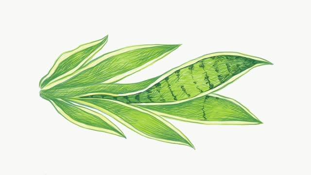 illustration footage of dracaena trifasciata plant on white background - succulent plant stock videos & royalty-free footage
