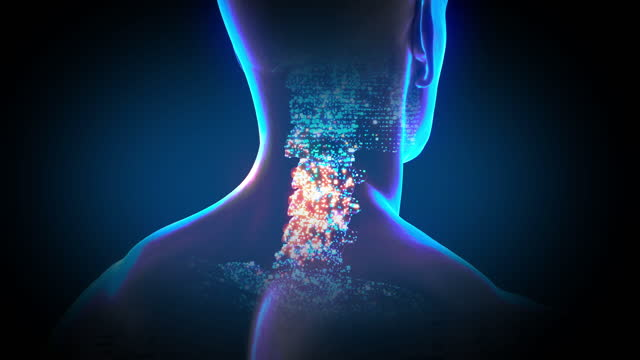 ヒト脊椎柱頸椎解剖学の3d図 - 胸椎点の映像素材/bロール