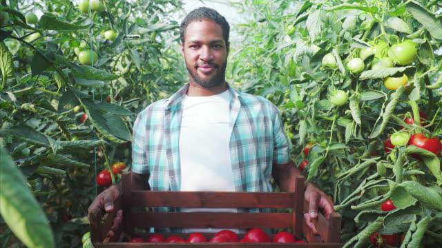 vidéos et rushes de im prêt à livrer des tomates fraîches et biologiques. - légume