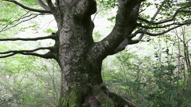 image of a tree seen from the human eye, up from the trunk to the branches - parque natural stock videos and b-roll footage