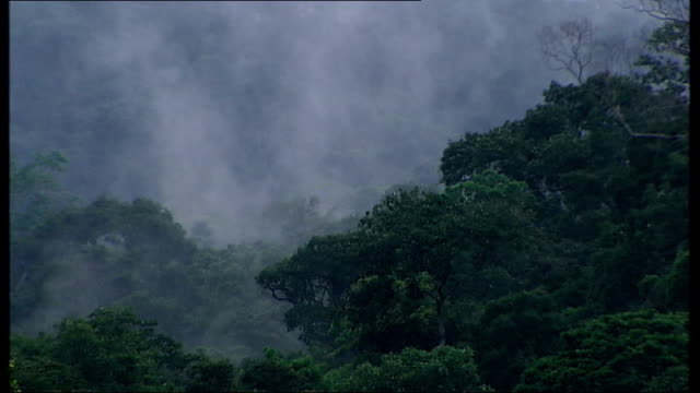 vidéos et rushes de images of mashcopiro tribe released t03120919 amazon rainforest haze of water vapour hanging over amazon rainforest trees illegal loggers using... - bûcheron