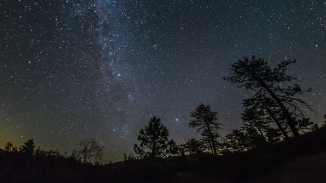 vídeos de stock, filmes e b-roll de ime-lapse of the peak of the 2016 perseid meteor shower over pine trees - chuva de meteoros