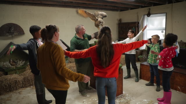 vídeos de stock e filmes b-roll de imitating the eagle owl - jardim zoológico