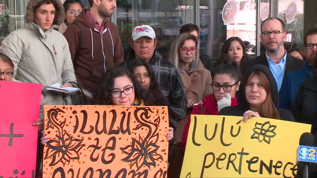 wgn immigration rights activist lulu martinezvaldez was granted asylum in chicago on april 25 but she says the fight continues the 28yearold was... - years stock videos and b-roll footage
