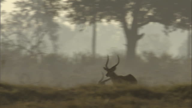 impala run in smoke from a wildfire over the okavango delta in botswana. - mammal stock videos & royalty-free footage