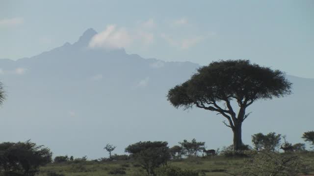 ws, impala (aepyceros melampus) walking through savanna, mount kenya in background, laikipia, kenya - stationary process plate stock videos & royalty-free footage