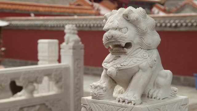 ms imperial lion / hohhot, inner mongolia, china - imperial lion stock videos and b-roll footage