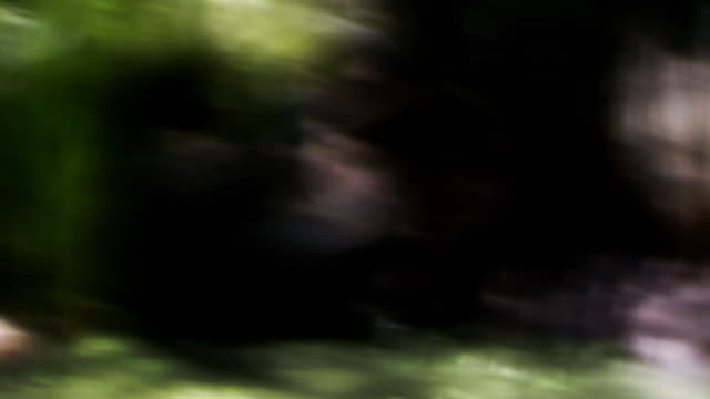 vídeos y material grabado en eventos de stock de impressionistic splotches - foco difuso