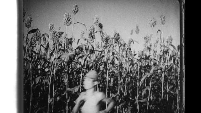 in a harvest festival sons of japanese settlers compete as they run past crops and blindfolded girls have a contest in which they try to identify... - harvest festival stock videos & royalty-free footage