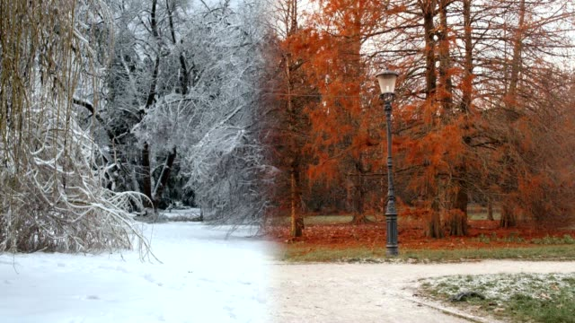 4 seasons in a park - le quattro stagioni video stock e b–roll