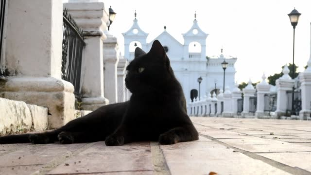 vídeos de stock e filmes b-roll de in a remote colombian town a family is thought to have a pact with the devil because of the dozens of cats that watch over the tombs where their... - remote location