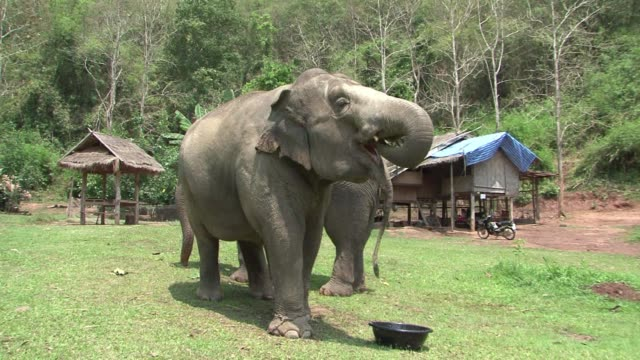 In a remote corner of northern Thailand one of the most expensive coffees in the world is being produced via the digestive tract of elephants