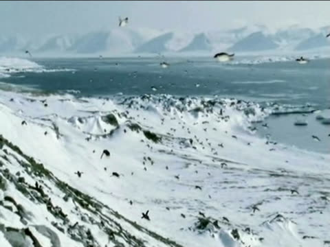 In a spoof flocks of penguins fly over Antarctica.
