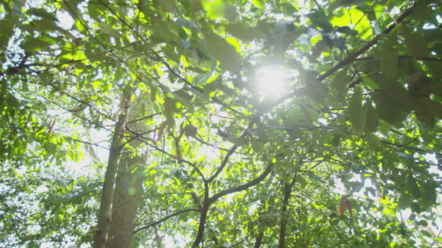 in a wood looking at the top of trees in a sunny day with the sun passing through the branches v.1 - soft focus stock videos & royalty-free footage