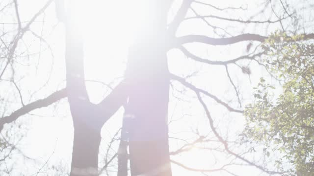 in a wood looking at the top of trees in a sunny day with the sun passing through branches v.3 - soft focus stock videos & royalty-free footage