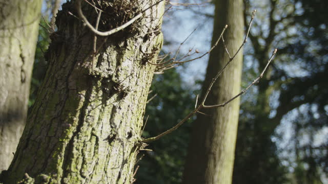 in a wood moving around the trees focusing on the trunks in a sunny winter - soft focus stock videos & royalty-free footage