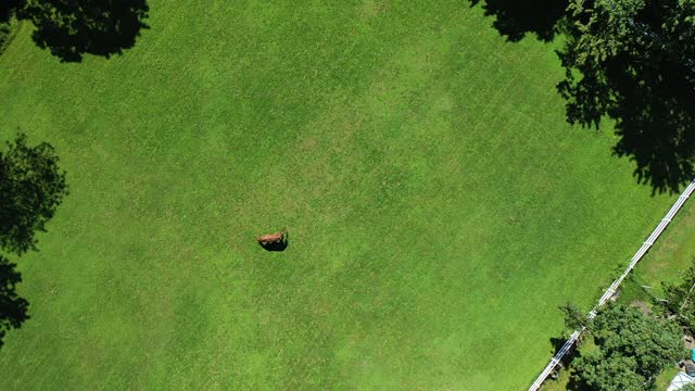 in an aerial view, a horse grazes at the thomas school of horsemanship summer day camp & riding school on september 2, 2021 in melville, new york. - one animal stock videos & royalty-free footage